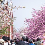 造幣局桜の通り抜けは何時まで?行き方や屋台の営業時間は?2017年版