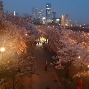 桜の通り抜け 造幣局 画像