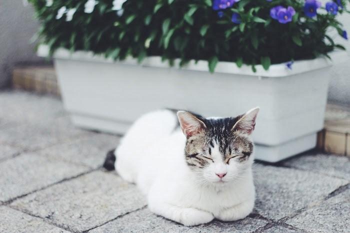 癒し 画像 猫